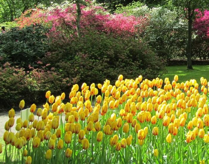 Jardines de famosos bonitos y armoniosos jardines cuanto for Jardines con arboles y arbustos