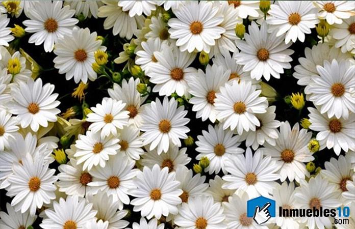 Flores usadas como antidepresivos
